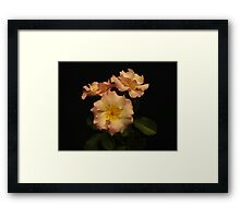 Beauty in Three Framed Print