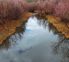 Autumn's Reflection by Betty  Town Duncan