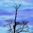 The Hawk at Twilight by TrendleEllwood