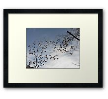 Birds. Are you sure? Framed Print