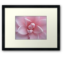 Perfect Pink Flower - Camellia  Framed Print