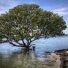 Mangrove Tree by Bill Wetmore