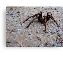Tarantula a Creepin' Canvas Print