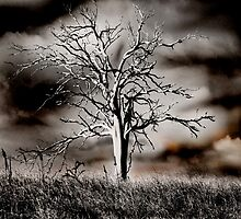 The Hanging Tree by Damian Harding