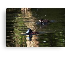 In Pursuit of a Blue-Bill Canvas Print