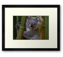 My Backyard Koala Bear Framed Print