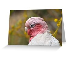 Galah portrait Greeting Card