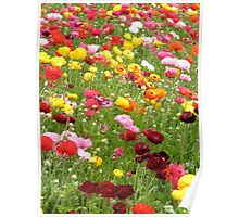 Happy Patch - Floral Rainbow  Poster