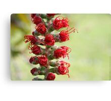 Red As, nature Canvas Print