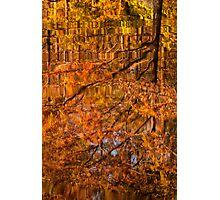 Fall Descending Photographic Print