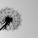Silhouette by Andrejs Jaudzems