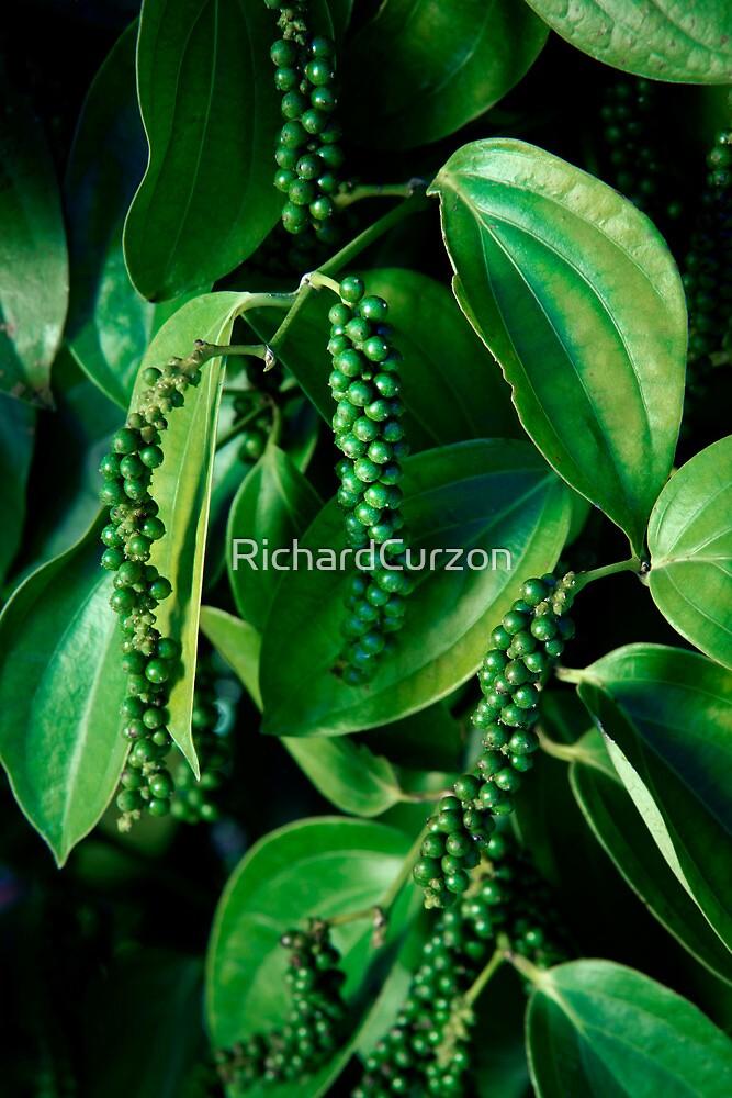 Peppercorn Plants - Far North Queensland by RichardCurzon
