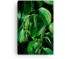 Peppercorn Plants - Far North Queensland Canvas Print