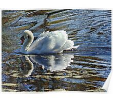 Swan on a Clear Day Poster