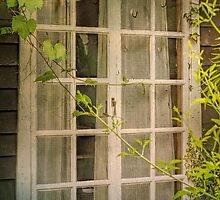 Creepers on my Window by Elaine Teague