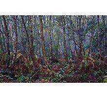 Woodland Maze 1 Photographic Print