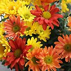 Red, yellow and orange colorful autumn daisy flowers. floral photography. by naturematters