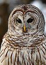 Barred Owl closeup by Jim Cumming