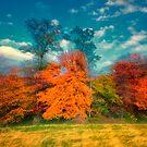 Autumn Foliage Zoom by KellyHeaton