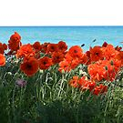 Where the poppies grow by Heather Crough