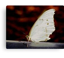 Butterfly in White Canvas Print