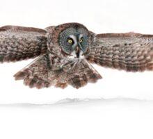 Silent Hunter - Great Grey Owl Sticker