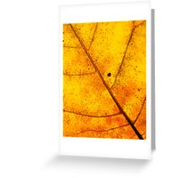 Surface of the Sun Greeting Card