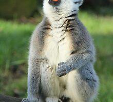 The Lemur by brettus1989