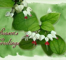 Merry Christmas Greeting Card - Red  And White Fuchsia by MotherNature