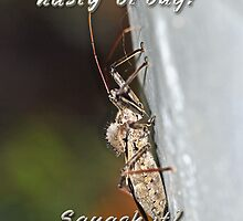 Get Well Greeting Card - Assassin Bug - Feel Better Soon by MotherNature