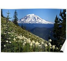 Mt Adams & Beargrass Poster