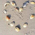 Heart of shells by Noelle Loberg