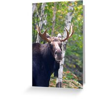 Maine Bull Moose  Greeting Card