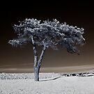 Infrared Tree by Kathleen Murtagh