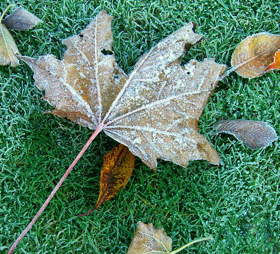 Jack Frost Cometh by Lesliebc