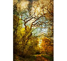 Path in the woods Photographic Print
