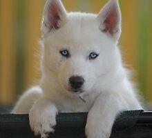 Blue Eyes Bed by Benita Walker