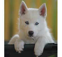 Blue Eyes Bed Photographic Print