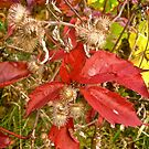Burrs and Red Leaves by Shulie1