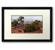 Survival in a tough land Framed Print