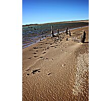 Twiggy Beach Photographic Print