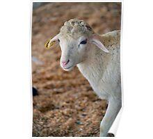 Soft as Lamb Poster