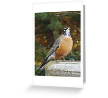 Robins Bath Greeting Card