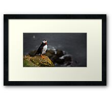 Wild Birds: Puffin on a Cliff, Iceland Framed Print