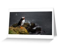 Wild Birds: Puffin on a Cliff, Iceland Greeting Card