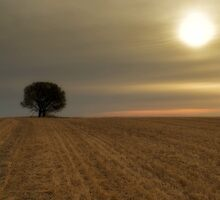 Wheat cut and the sun sets. by WendyPhilip
