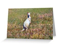 Albino Kangaroo 2 Greeting Card