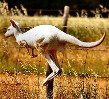 Albino Kangaroo 3 by Bami