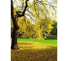 Autumn in New York  Photographic Print