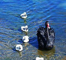 A Pen & Her Cygnets In The Park.. by Raven Fielding